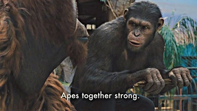 Ape together strong